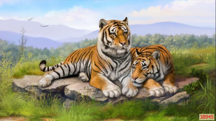 Tranh Cặp Hổ Đẹp - 38945