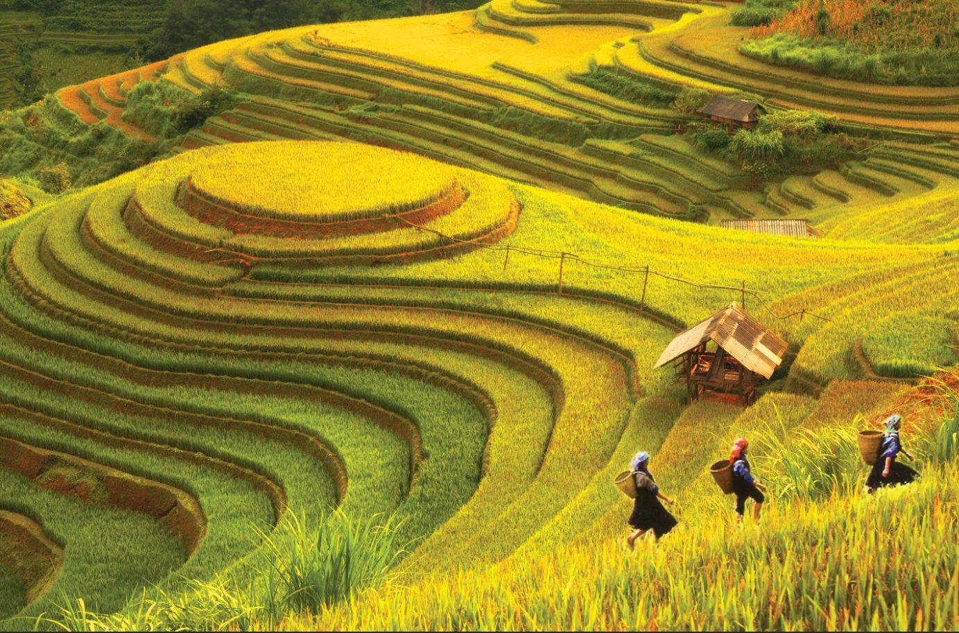 Tranh Phong Cảnh - 10438