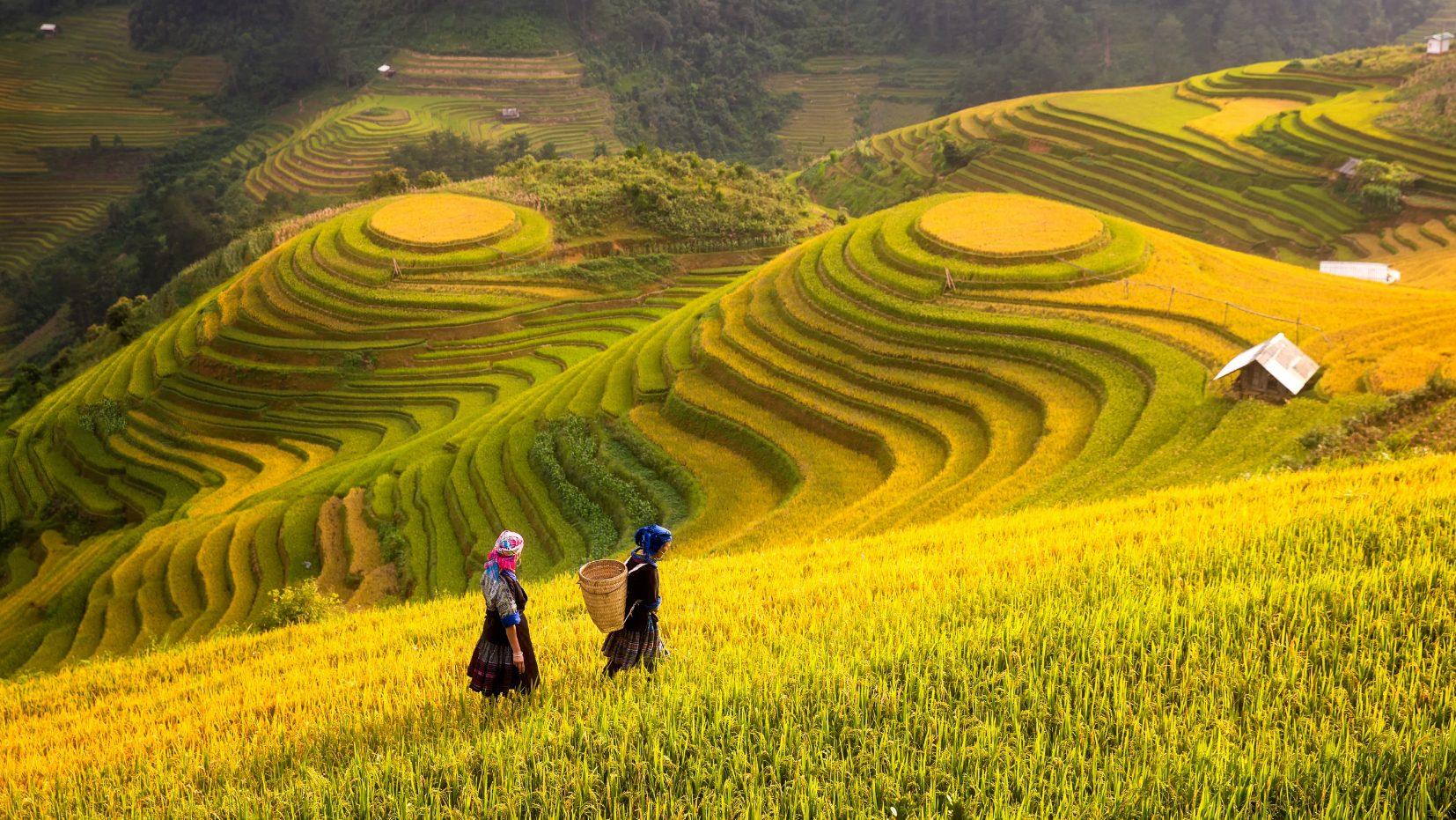 Tranh Phong Cảnh - 10525