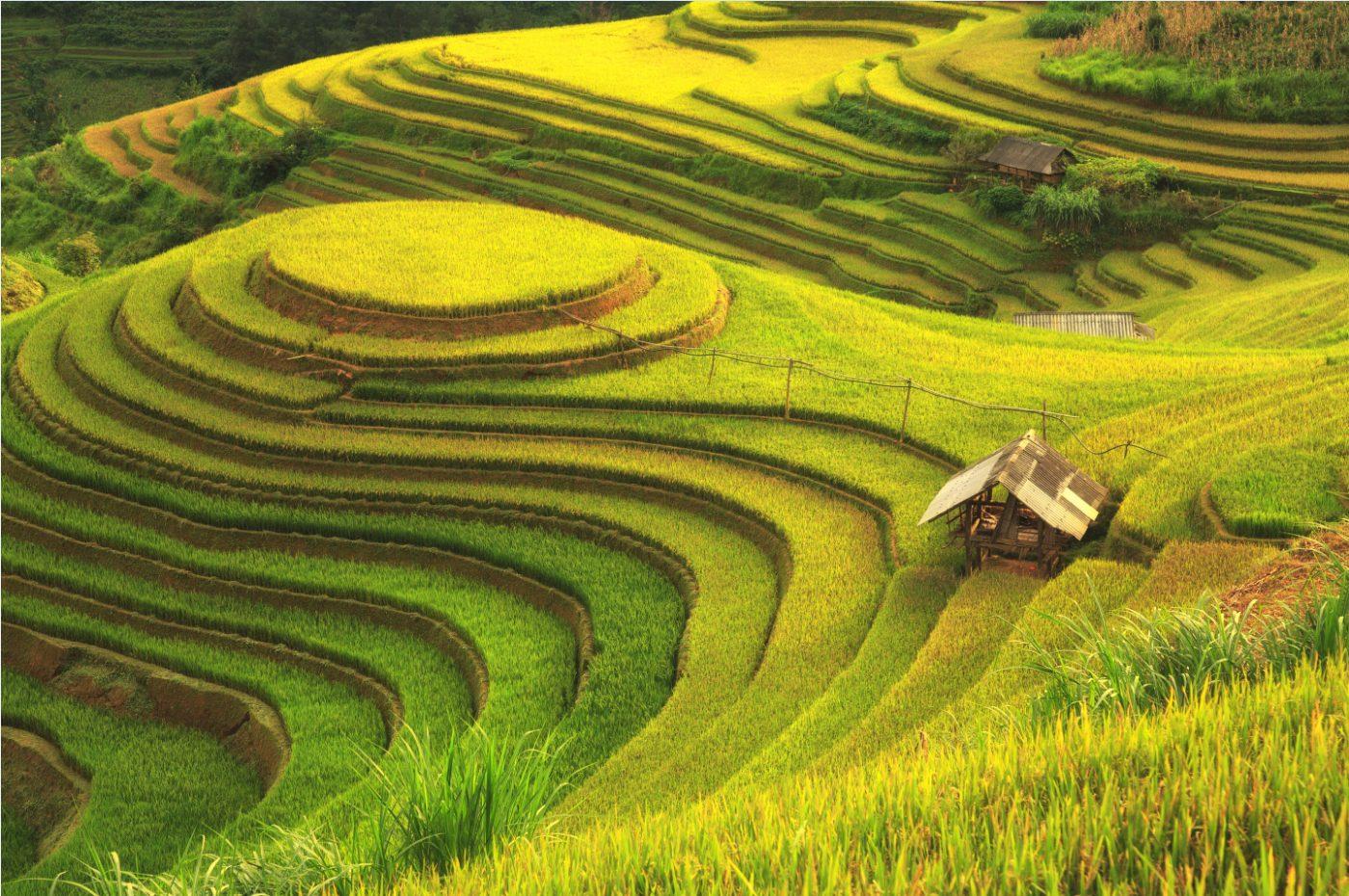 Tranh Phong Cảnh - 10539