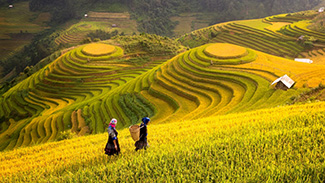 Tranh Đồng Quê - DQ57024