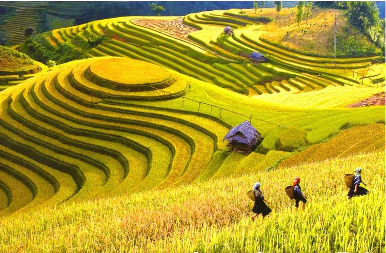 Tranh Đồng Quê - DQ57011